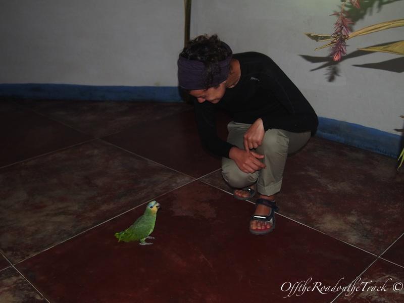 Ben ve minik tatlı sapığım papağan :))