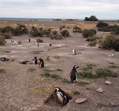 Arjantin Patagonya -2: Peninsula Valdes…