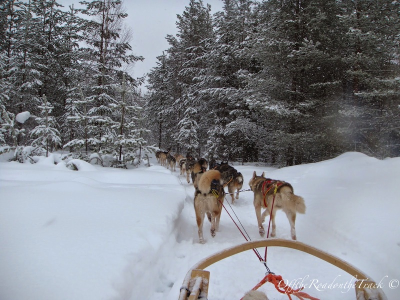 Huskylerle geziden bir kare