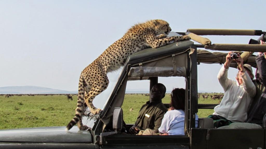 Safari :) (http://galleryhip.com adresinden alıntıdır)