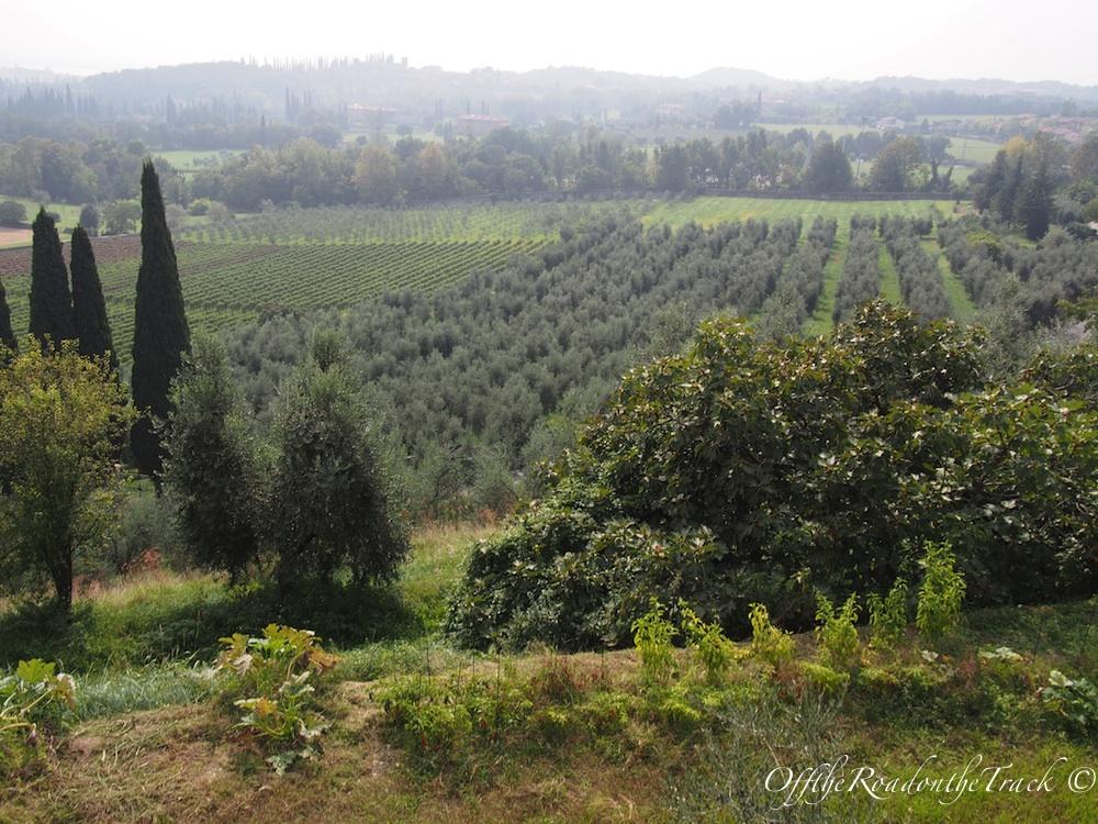Garda Gölü: Üzüm ve zeytin bağları