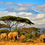 Tanzanya 1