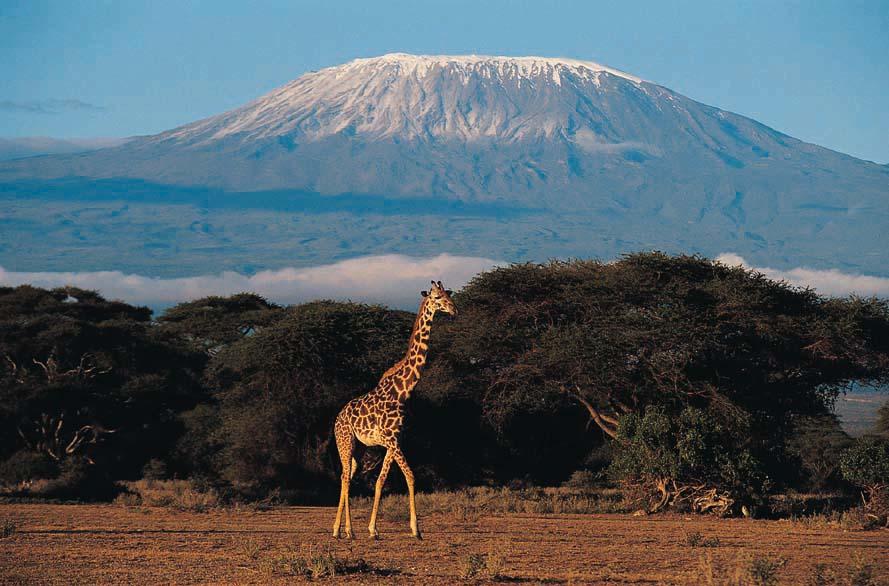 Heybetli Kilimanjaro (fotoğraf kathyloperevents.com'dan alıntıdır)