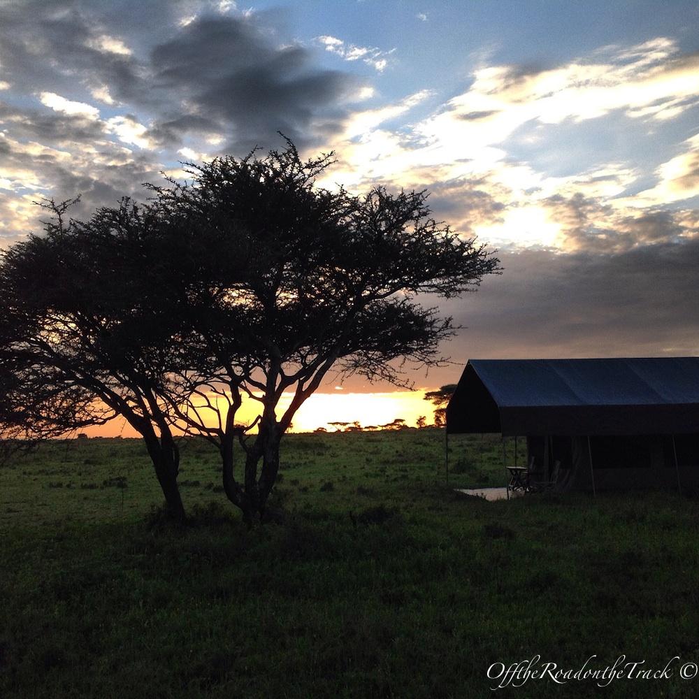 Tanzanya'da SAFARİ