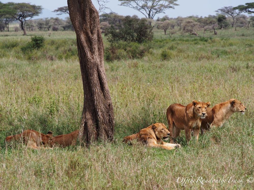 Tanzanya'da SAFARİ - Serengeti