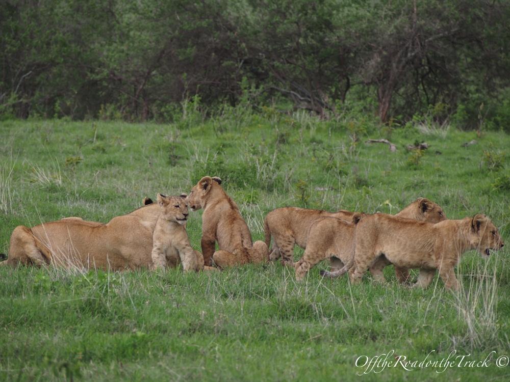 Tanzanya'da Safari - Ngorongoro Krateri