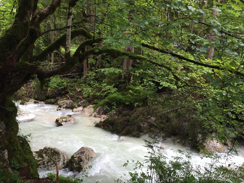 Sihir Ormanı