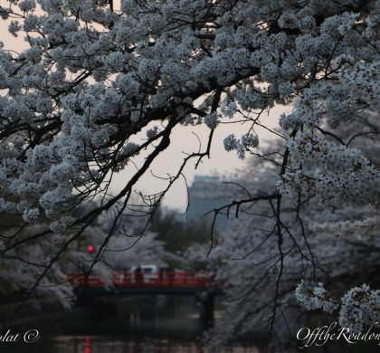Japonya Rota: Başkentlerin Başkenti – KYOTO