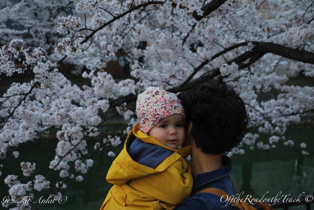 Kyoto - Japonya Mart 2018