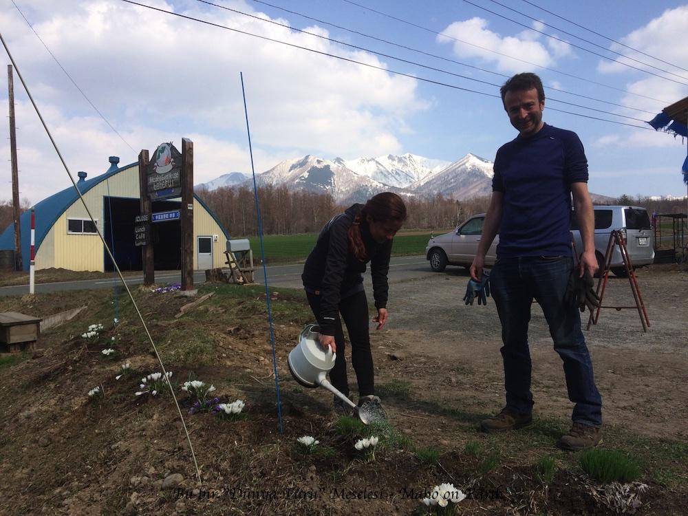 Furano_Farm_Replanting_Flowers-imp