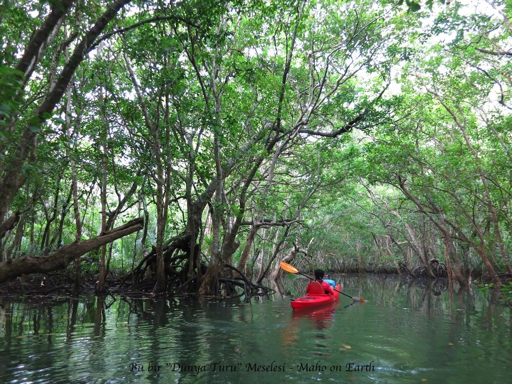 Mangrove_Firefly_Kayaking_4-imp